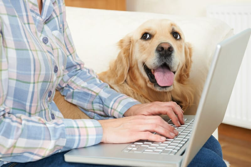 Dog Sitting Next To Owner Using Laptop